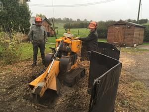 specialist in het verwijderen van boomstronken